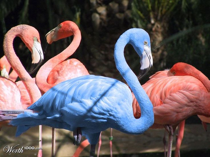 What Makes Flamingos Pink in Color? Photos & More Facts.