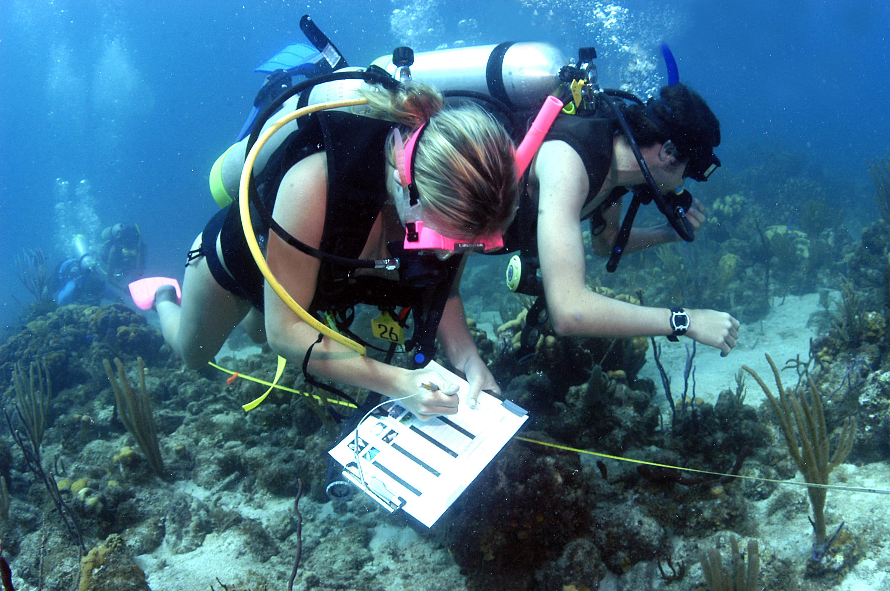 school of fishes marine biology