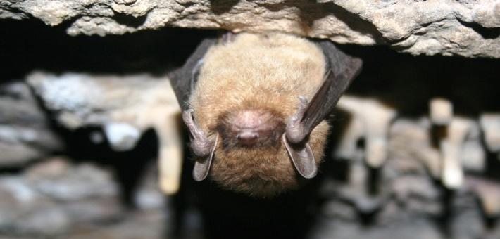 Cauldron of Bats - USFWS