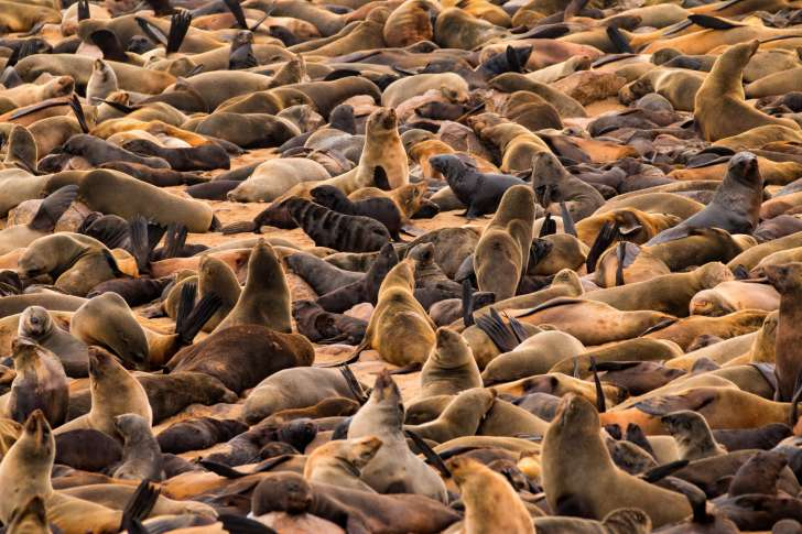 Group of Seals is called a pod, harem or rookery.