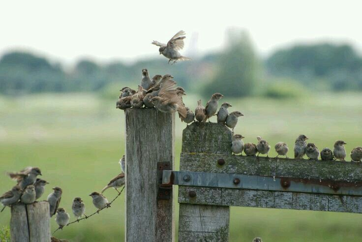 Dissimulation or flock of birds photo